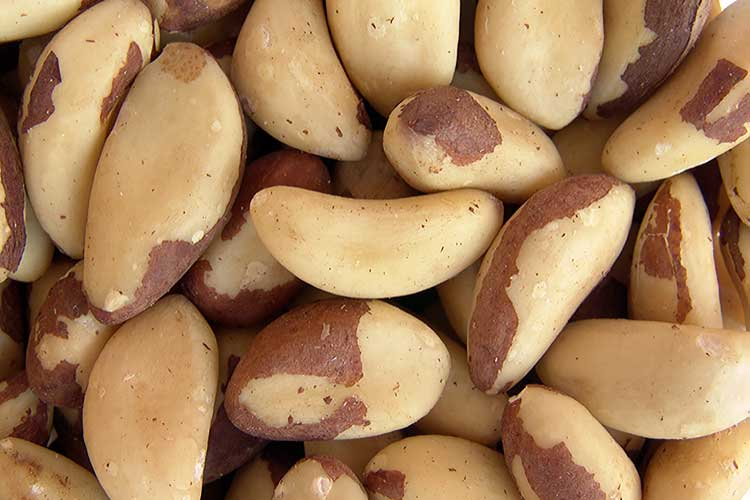 brazil nuts castanhas do para big
